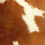 COWHIDE Brown + White